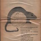 Walrus Vol.4 N°7 30x44